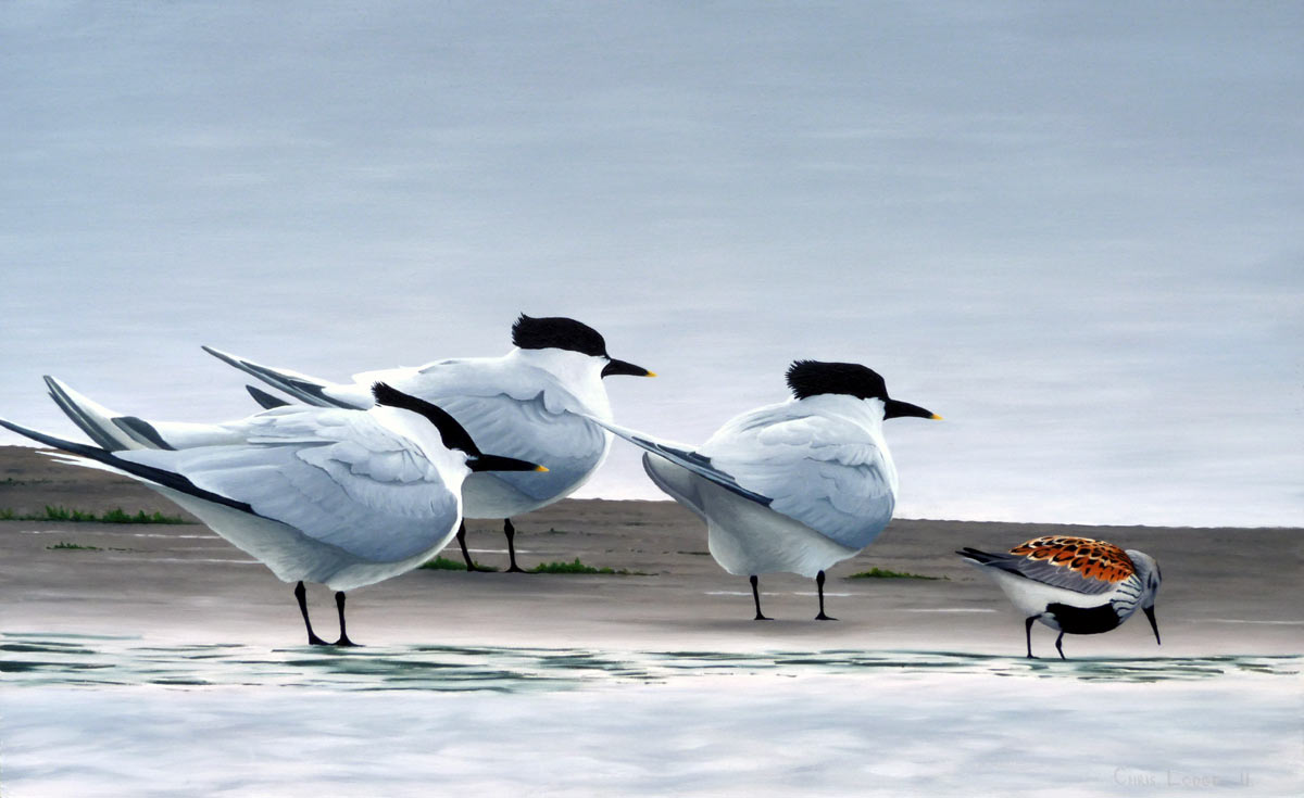Sandwich Terns and Dunlin Print