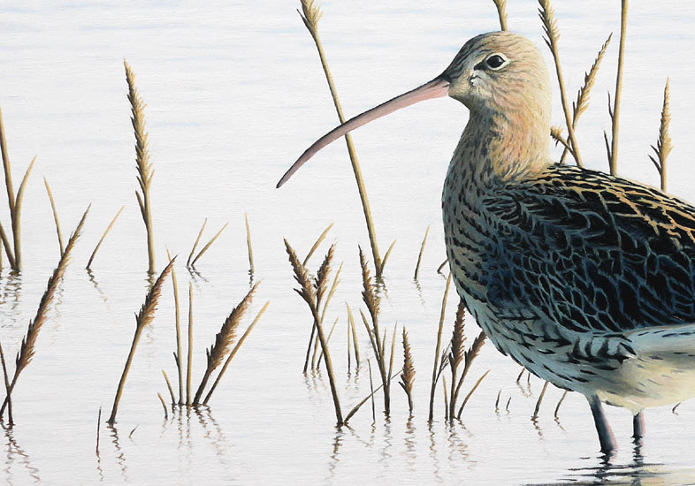 Curlew 'Spring Tide' - An Original Oil Painting By Bird Artist Chris Lodge
