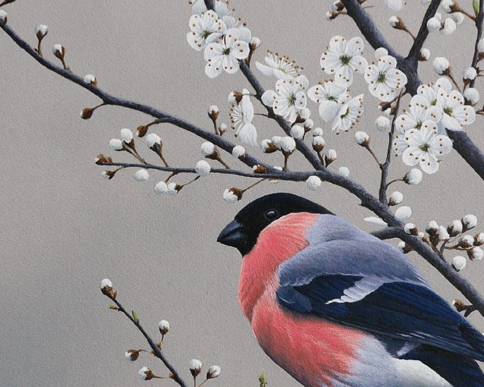 Bullfinch and Blackthorn Bird Print By artist Chris Lodge