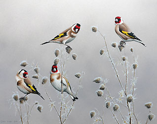 Winter Goldfinches Bird Print by Chris Lodge