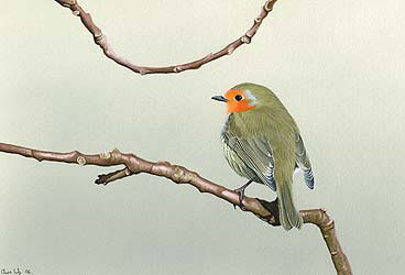 robin Bird Print by Chris Lodge
