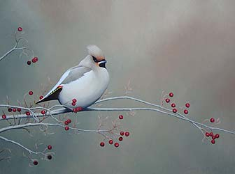 Autumn Waxwing Bird Print by Chris Lodge